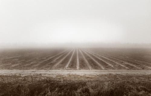 strawberry field fog 2.14